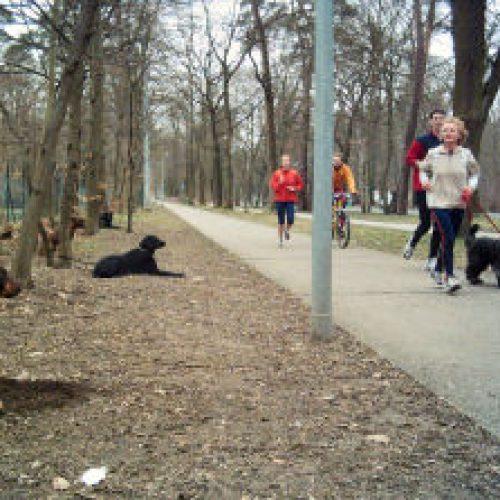 Radfahrer, Jogger und fremder Hund auf einen Streich