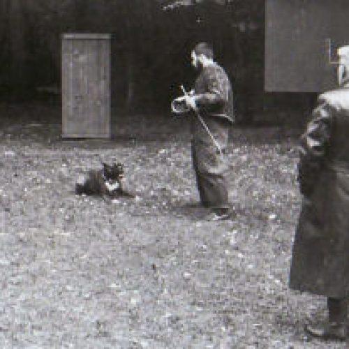 Schutzhundeprüfung SchH III am 21.10.1984. Leistungsrichter Willy Krämer, Meckesheim, Hundeführer Roland Geiger mit Dt. Boxer Barry, Helfer im Schutzdienst Roland Diebold